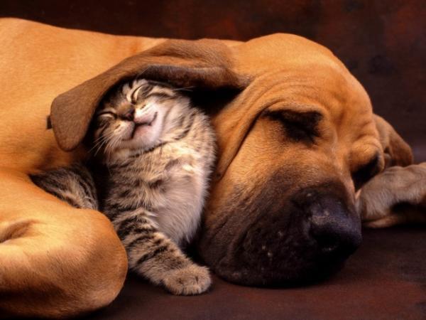 Дружба котов и собак