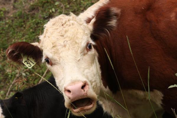 23 животных, которые умеют удивляться не хуже нас!