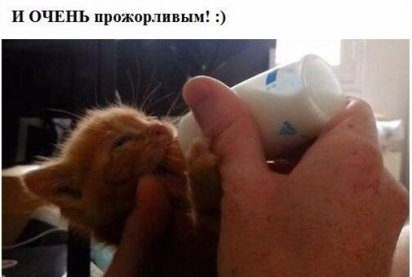 История о спасении милого зверька.