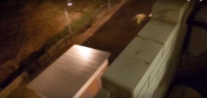 Парень просто решил обследовать балкон своей новой квартиры. Обнаруженное там шокирует!