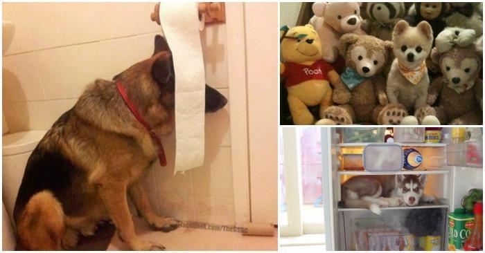 20 собак, которые «очень хорошо» спрятались :)