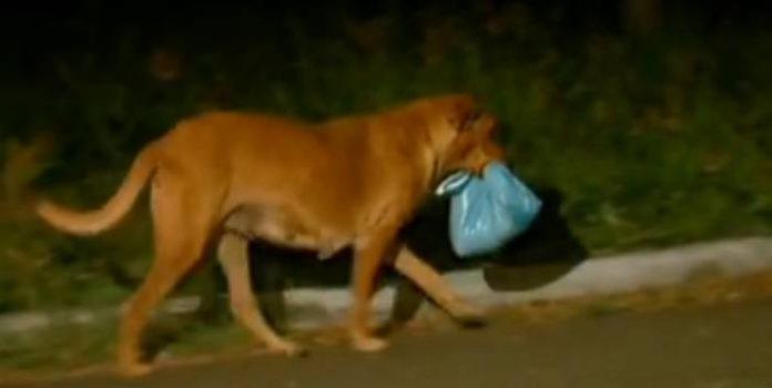 Нет! Это не пакет с мусором! Вы будете тронуты до слез, когда узнает, что принесла эта собака!