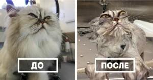 50 забавных животных до и после водных процедур