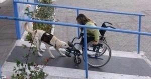 Пост, доказывающий, что у собак золотые сердца