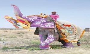 Фестиваль слонов в Индии.