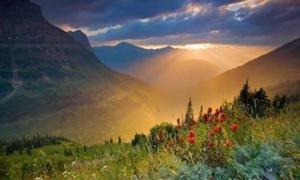 «Куда приводят мечты»: Долина Цветов в Гималаях