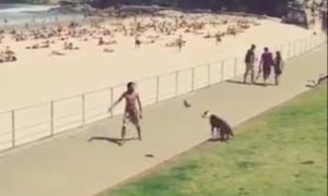 Пёс играет в футбол со своим хозяином