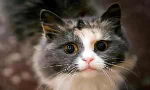 Почему стоит завести кота?