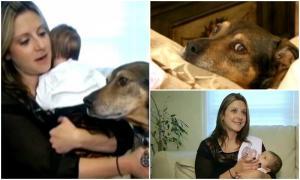 Собака спасла ребёнка.