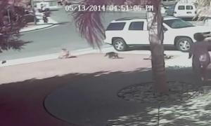 Кошка спасла маленького мальчика от бешеной собаки.
