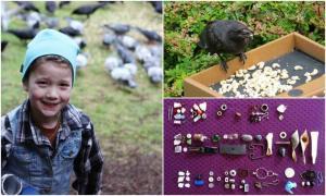 8-летняя девочка получает подарки от ворон, которых она подкармливала еще с 4 лет.