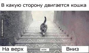 В какую сторону двигается кошка?