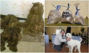Как добрые люди спасли этих собак.