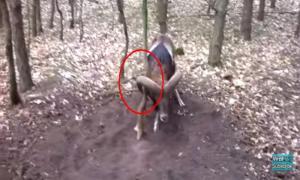 Бедный муфлон попал в беду. Но к счастью пробегавший мимо мужчина помог ему.