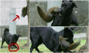 Когда мама-белка увидела, как собака напала на ее малыша, она сделала невероятное