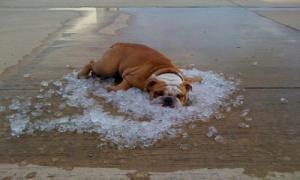 10 советов как пережить жару в квартире