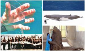 18 самых крупных обитателей океана