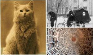 25 удивительных фотографий, которых вы возможно не видели