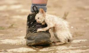 Над этим уродливым котом издевался весь двор. Однако он подарил обидчикам нечто большее...