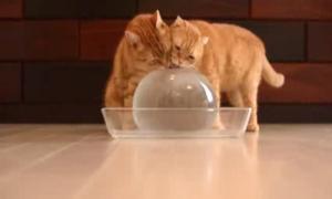 Забавное видео о том, как кошки играют с ледяным шаром