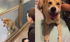 16 собак до и после того, как их забрали из приюта