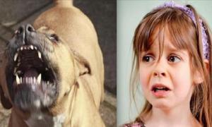 То, что питбуль каждый вечер делал для девочки, перевернет твое представление о бойцовских псах!