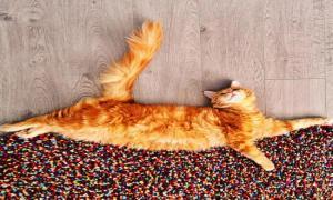 Такой холодной осенью очень не хватает теплого, большого и солнечного кота!