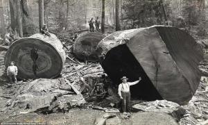 35 исторических фото, достойных вашего внимания