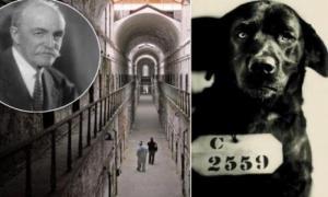 Собака, которая была приговорена к пожизненному заключению
