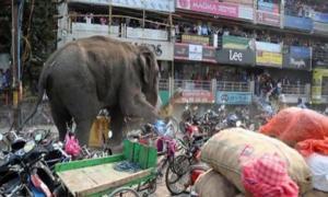 Слон устроил переполох в городе