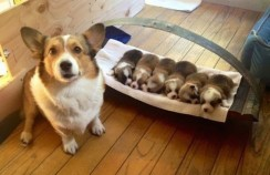 20 собак-мам, которые безмерно гордятся своими щенятами