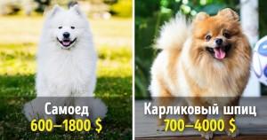 19 великолепных собак, которые стоят целое состояние